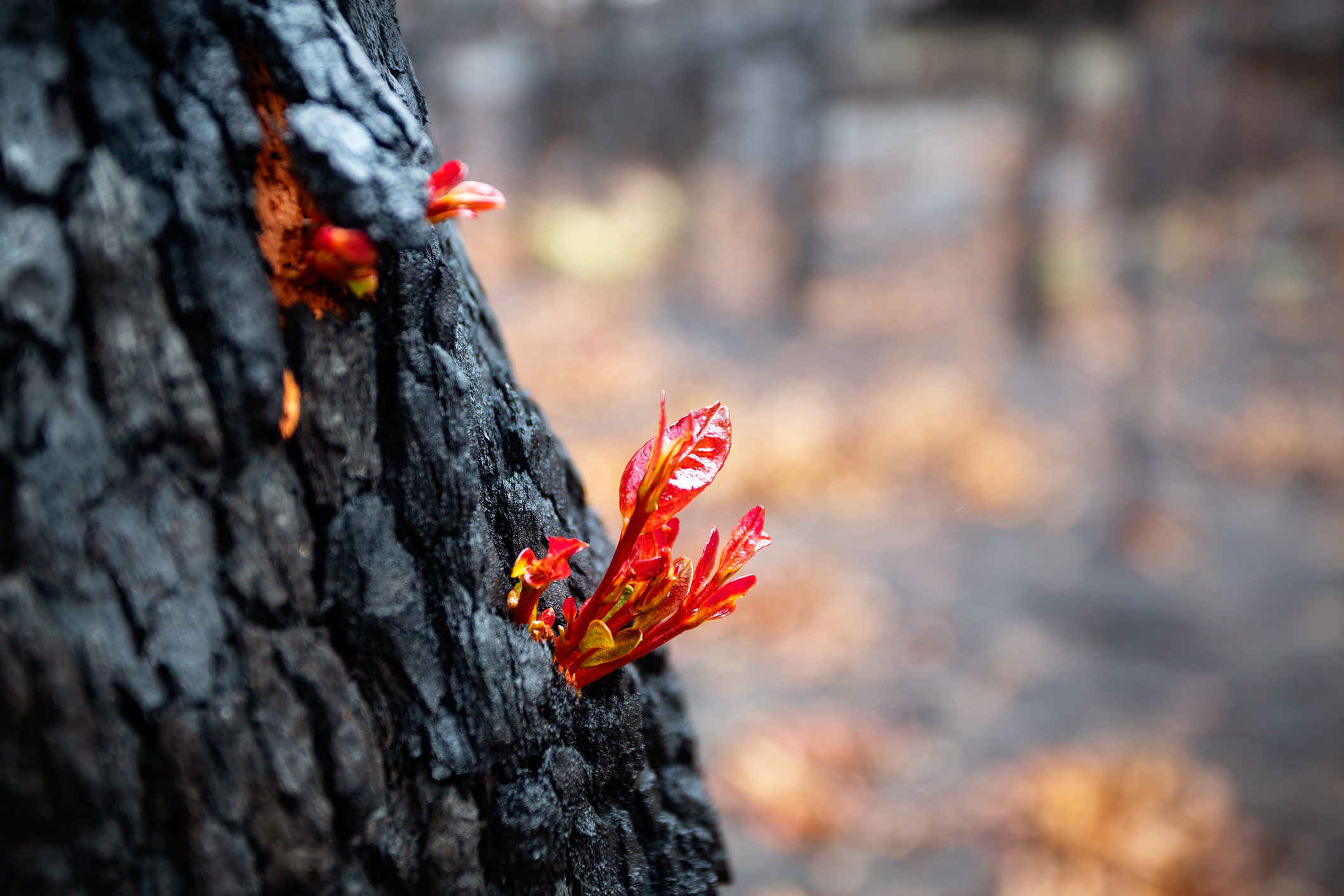 Funding open for Round 2 of Bushfire Recovery Grants